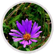 Lone Aster Round Beach Towel