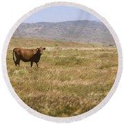 Lone Cow In Grassy Field Round Beach Towel