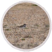 Lone Killdeer Round Beach Towel