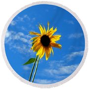 Lone Sunflower In A Summer Blue Sky Round Beach Towel