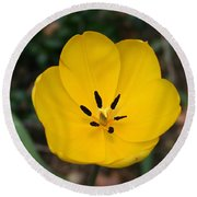 Lone Yellow Tulip Round Beach Towel