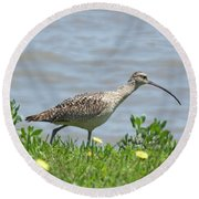 Long Billed Curlew At Palacios Bay Tx Round Beach Towel