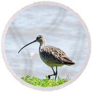 Long Billed Curlew  Round Beach Towel