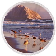 Long Billed Curlew - Morro Rock Round Beach Towel