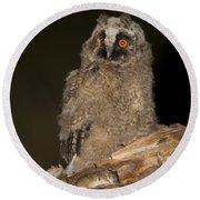 Long-eared Owl Asio Otus Round Beach Towel