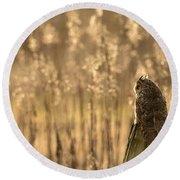 Long-eared Owl Round Beach Towel