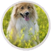 Long Haired Mixed Breed Round Beach Towel