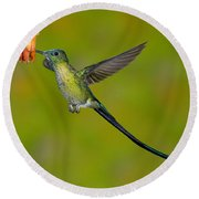 Long-tailed Sylph Round Beach Towel