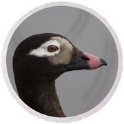 Longtailed Duck Round Beach Towel