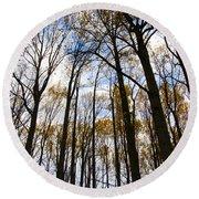 Looking Skyward Into Autumn Trees Round Beach Towel