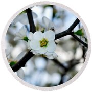 Looking Through The Blossoms Round Beach Towel