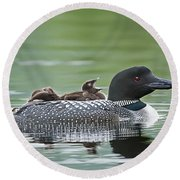 Loon Chick - Big Yawn Round Beach Towel