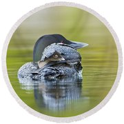 Loon Chick- Feather Hat Round Beach Towel