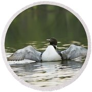 Loon Wing Spread - Drying Off Round Beach Towel