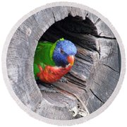 Lorikeet - Peek-a-boo Round Beach Towel
