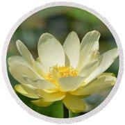 Lotus Blooming  Round Beach Towel