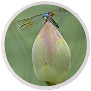 Lotus Bud And Dragonfly Round Beach Towel