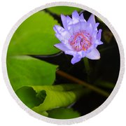 Lotus Flower And Lily Pad Round Beach Towel