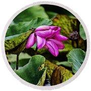 Lotus Flower- Gungarre Billabong Round Beach Towel