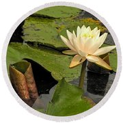 Lotus Flower In White Round Beach Towel