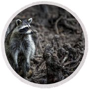 Louisiana Raccoon Round Beach Towel