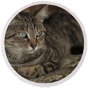 Lounging Cat Round Beach Towel