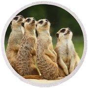 Lovely Group Of Meerkats Round Beach Towel