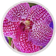 Orchid Lovely In Pink And White Round Beach Towel