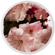 Lovely Pink Rhododendrons With Border Round Beach Towel