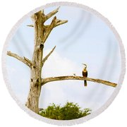 Low Angle View Of Cormorants Round Beach Towel