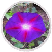 Luminous Morning Glory In Purple Shines On You Round Beach Towel