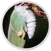 Luna Moth Actias Luna Newly Hatched Round Beach Towel