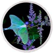 Luna Moth Astilby Flower Black Round Beach Towel