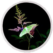 Luna Moth Astilby Flower  Round Beach Towel