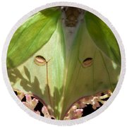 Luna Moth Faux Eyes Round Beach Towel