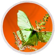 Luna Moth On Astilby Orange Back Ground Round Beach Towel
