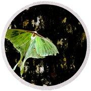 Luna Moth On Tree Round Beach Towel