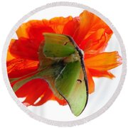 Luna Moth Poppy High Key Round Beach Towel