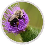 Lunching Atop A Thistle Round Beach Towel