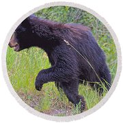 Lunging Black Bear Near Road In Grand Teton National Park-wyoming   Round Beach Towel