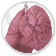 Lungs And Bronchi Round Beach Towel