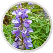 Lupine Along Trail To Rancheria Falls In Yk-canada   Round Beach Towel