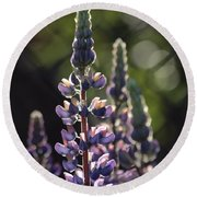 Lupine At The Gate Round Beach Towel