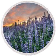 Lupine Dawn Round Beach Towel
