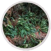 Lush Ferns Of The Forest Round Beach Towel