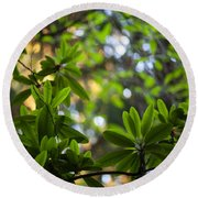 Lush Rhododendron Forest Round Beach Towel