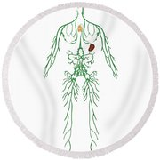 Lymphatic System, Illustration Round Beach Towel