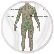 Lymphatic System In Male Anatomy Round Beach Towel