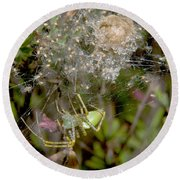 Lynx Spider And Young Round Beach Towel