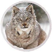 Lynx Stare Round Beach Towel